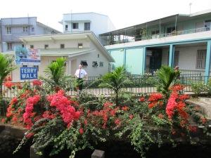 Beautiful flowers downtown Suva